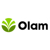 Olam.png